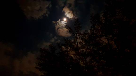 Full Moon the night Se Bear left